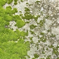 Click Props Background Vinyl with Print Moss Floor 1.52 x 1.52M