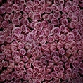 Click Props Background Vinyl with Print Roses Distressed Purple 1.52 x 1.52M