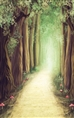 Click Props Background Vinyl with Print Fantasy Forest 1.52 x 2.44M