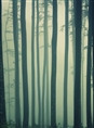 Click Props Background Vinyl with Print Foggy forest 2.13 x 2.90M