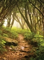 Click Props Background Vinyl with Print Forest Path 2.13 x 2.90M