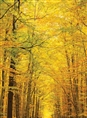 Click Props Background Vinyl with Print Golden Forest 2.13 x 2.90M